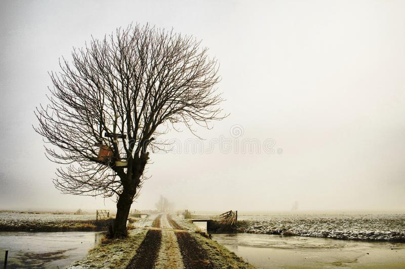 Winter tree in a foggy landscape stock photo