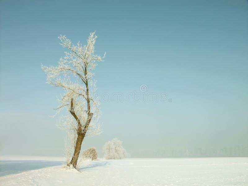 Download Winter Tree, Frost Covered Branches Stock Image - Image: 10794091