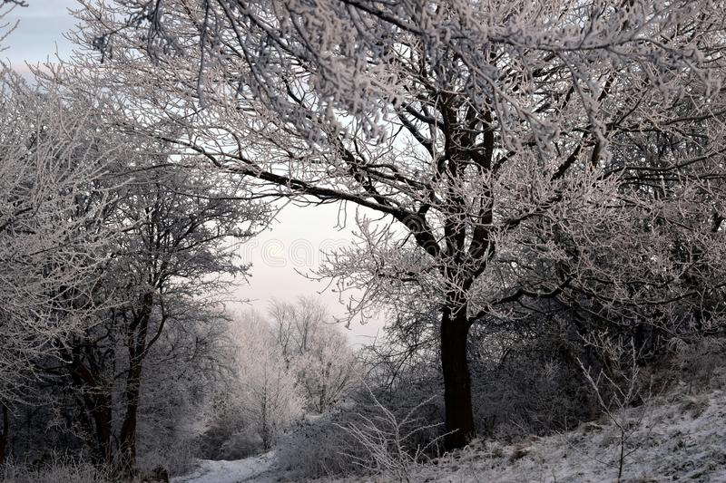 Winter, Tree, Frost, Snow royalty free stock photos