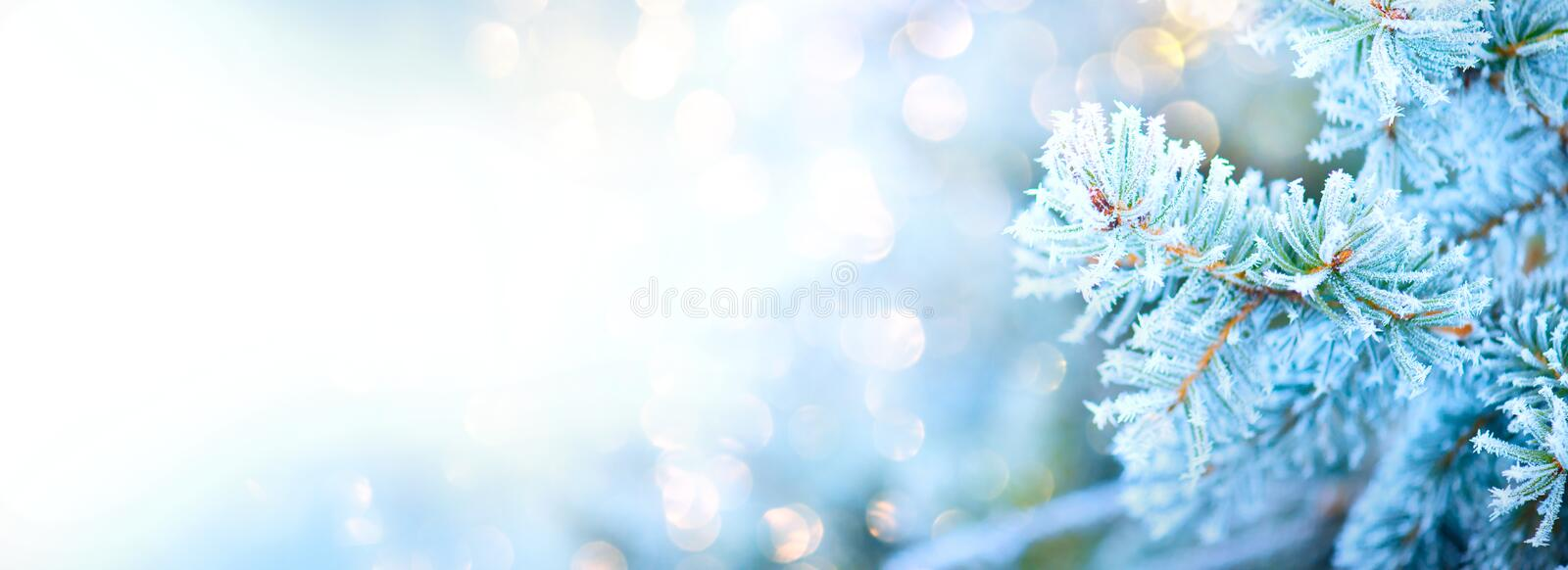 Winter tree holiday snow background. Blue spruce, Christmas and New Year tree border art design, abstract blue backdrop. With snow, widescreen stock photography