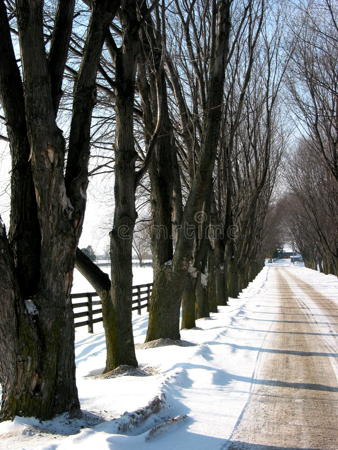 Download Winter tree lined lane 3 stock photo. Image of winter, fence - 433566