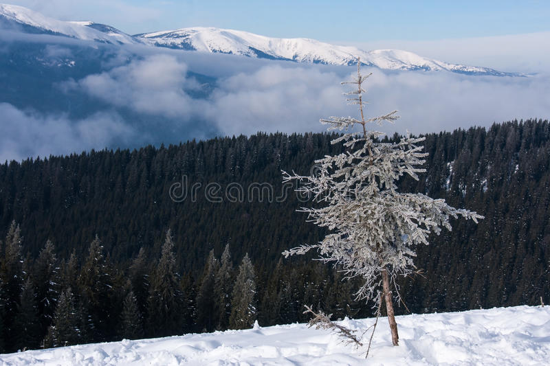 Download Winter Royalty Free Stock Images - Image: 35891869