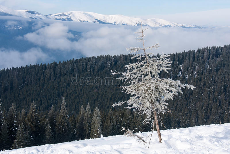 Download Winter stock image. Image of outdoors, wonderland, snowy - 38427865