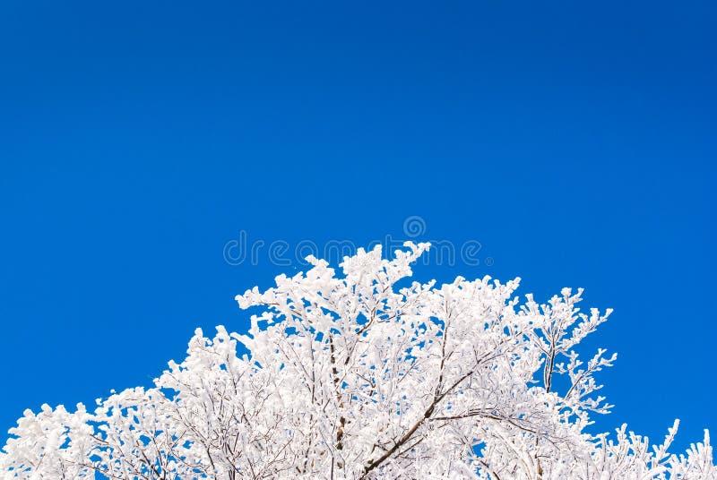 winter tree nature background stock photo