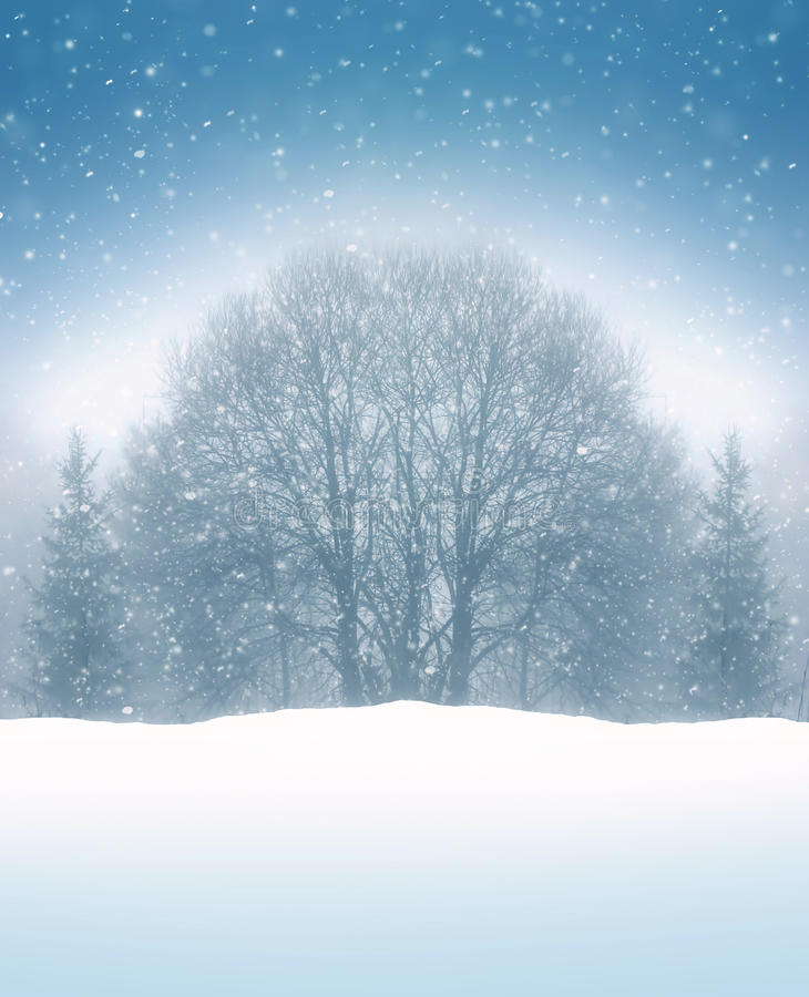 Winter tree and snaw fall background stock image