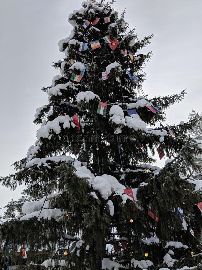 Winter, Tree, Snow, Christmas Tree royalty free stock image