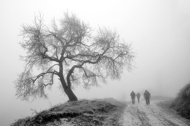 Winter tree and travelers in fog stock image