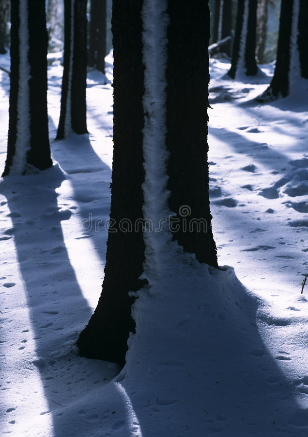 Download Winter tree trunks stock image. Image of outside, silence - 14755849