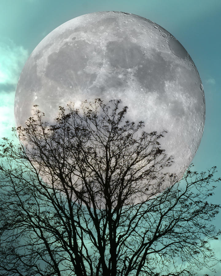 Winter Tree Under a Full Moon and Jade Teal Sunset Sky. Abstract Rendition Winter Tree Full Moon Teal Jade Sunset Sky stock image