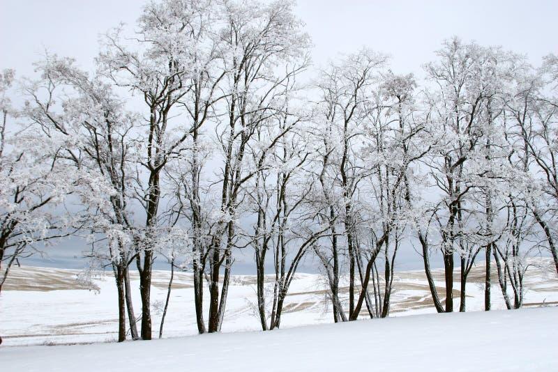 Winter Treeline lizenzfreie stockfotos