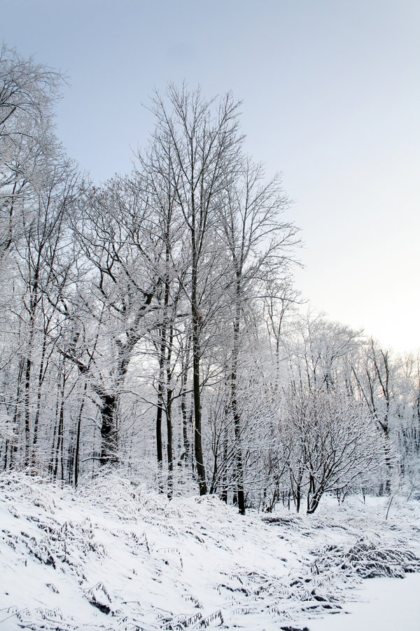 Download Winter Trees stock image. Image of landscape, winter, trees - 3949667