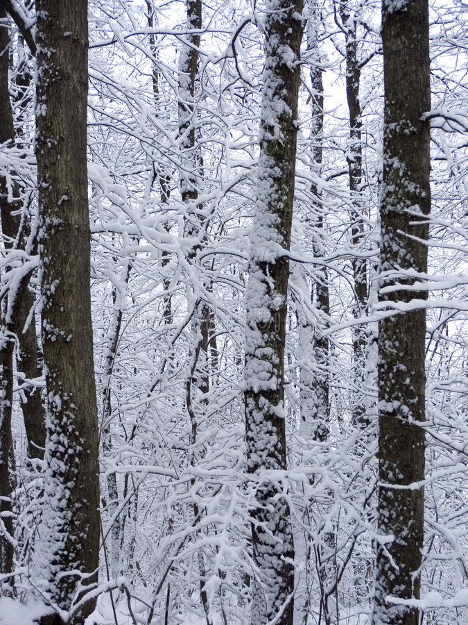 Winter trees royalty free stock images
