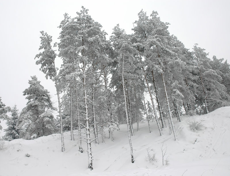 Download Winter trees stock image. Image of branch, december, winter - 450629