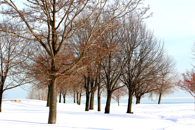 Download Winter Trees stock photo. Image of snow, temperature, outdoor - 7590570