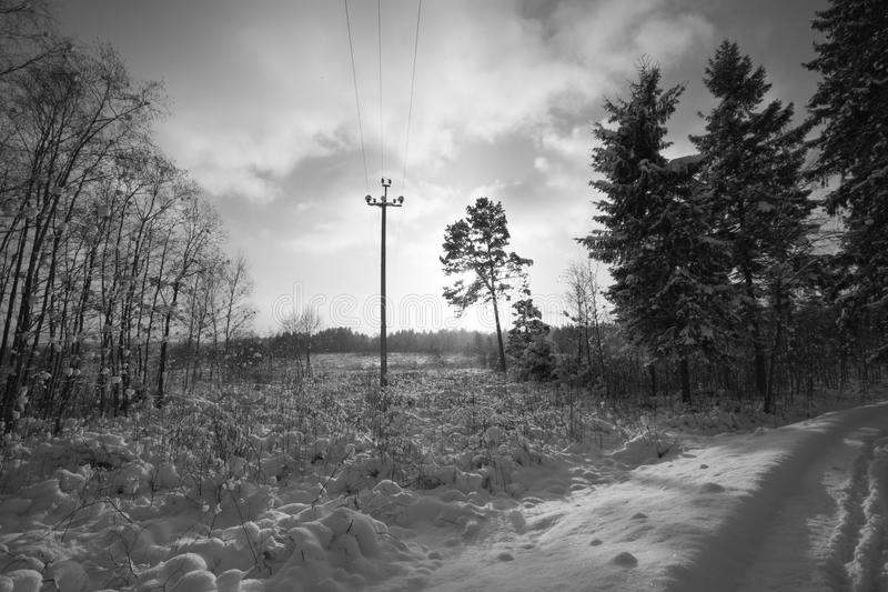 Winter trees. Black and white photography. stock image