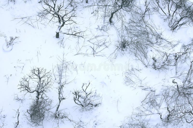 Download Winter Trees And Bushes, Top View Stock Photo - Image: 83708872
