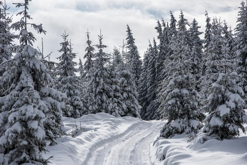 Winter trees covered with fresh snow stock photography