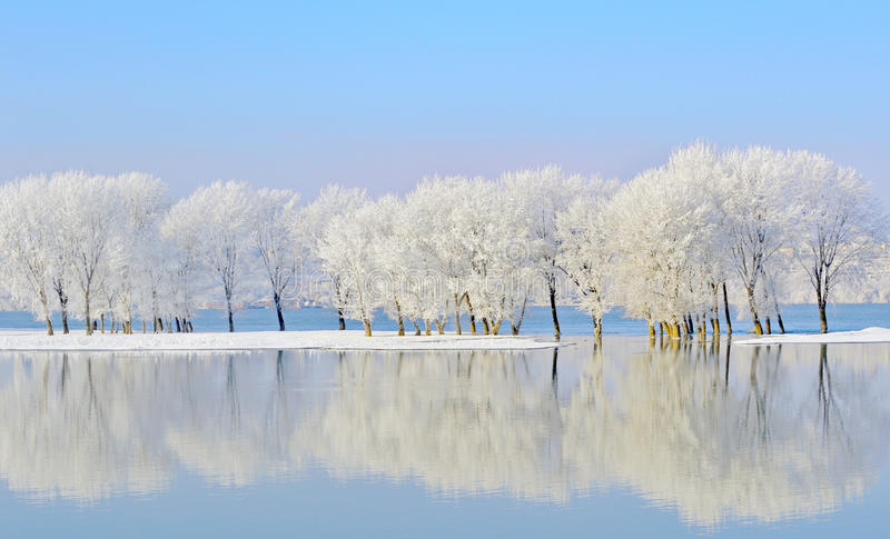 Winter trees covered with frost royalty free stock photos