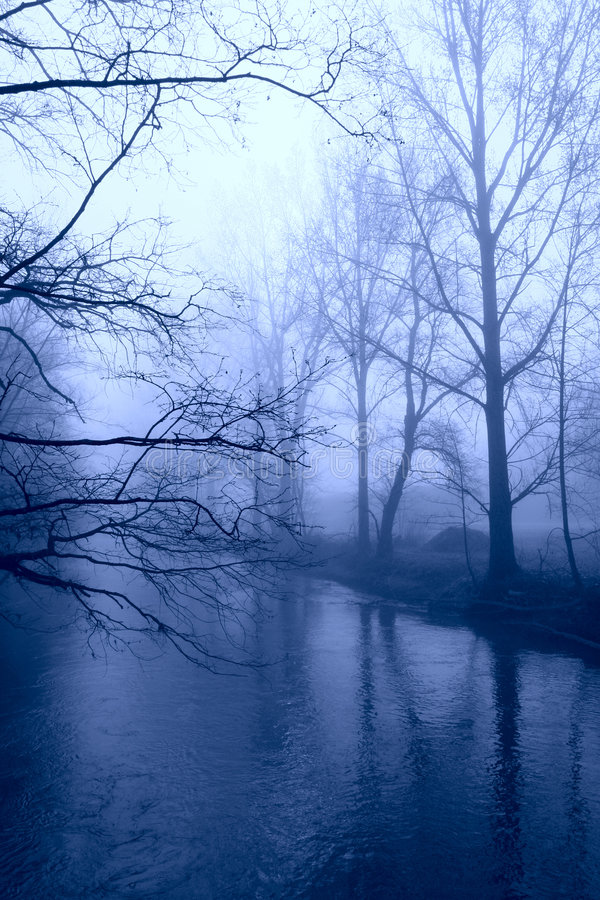 Winter trees in fog. Naked trees in blue fog at river stock photos