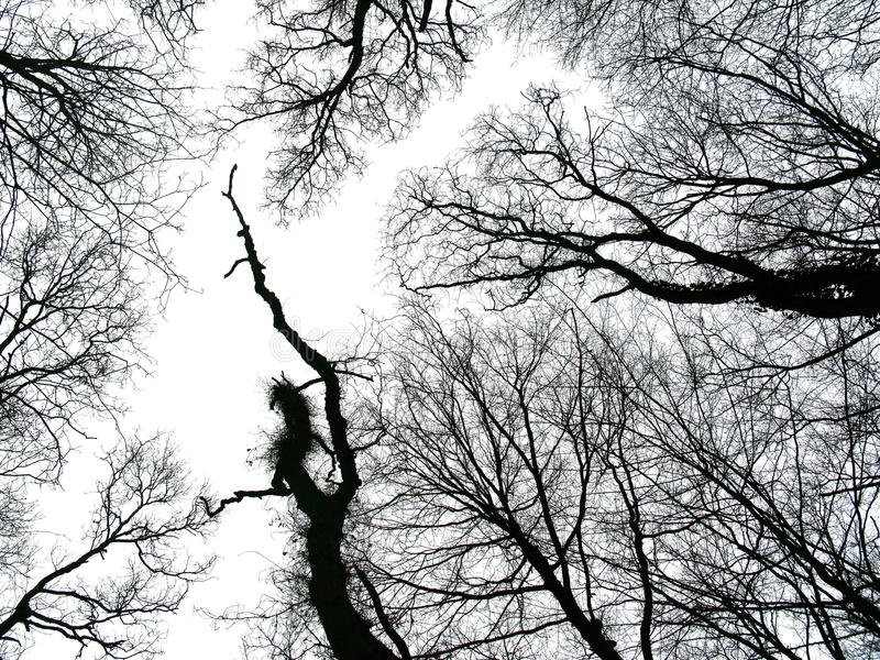 Winter trees kissing sky royalty free stock photography