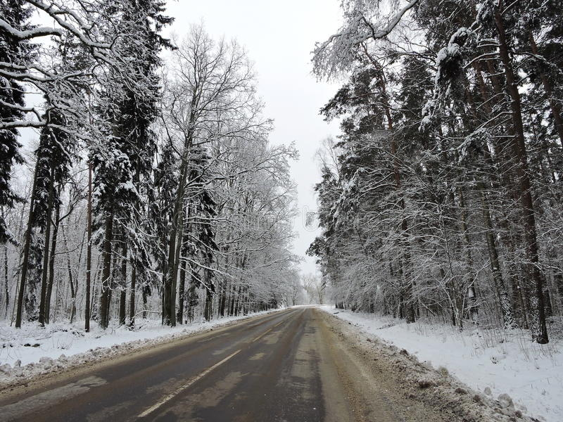 Download Winter trees , Lithuania stock image. Image of white - 83705193