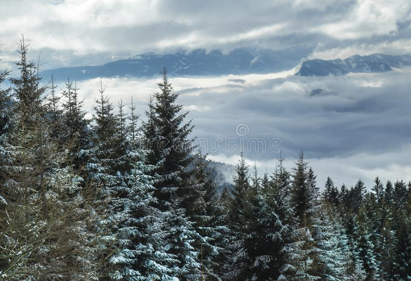 Winter trees in mountains, nature landscape royalty free stock image