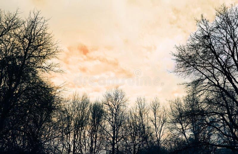 Winter Trees on Orange Sky Background stock photo