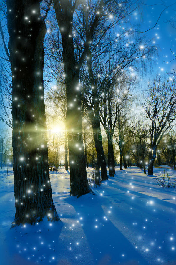 Winter, trees in park stock photo