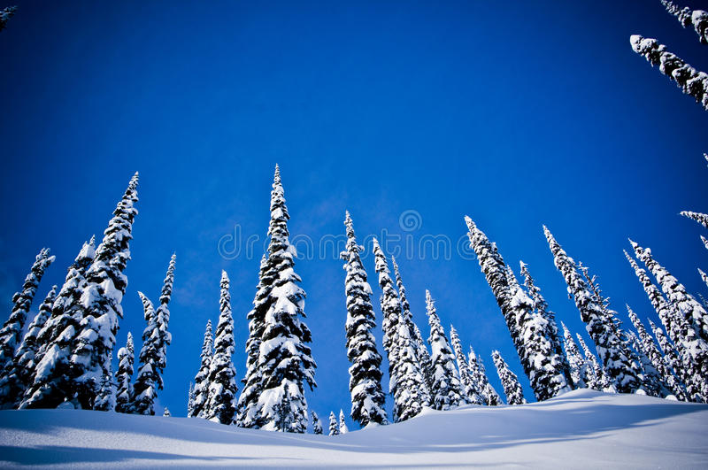 Winter trees snow 2 royalty free stock images