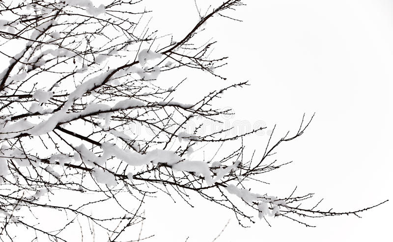 Download Winter trees on snow stock image. Image of snow, rural - 23335487