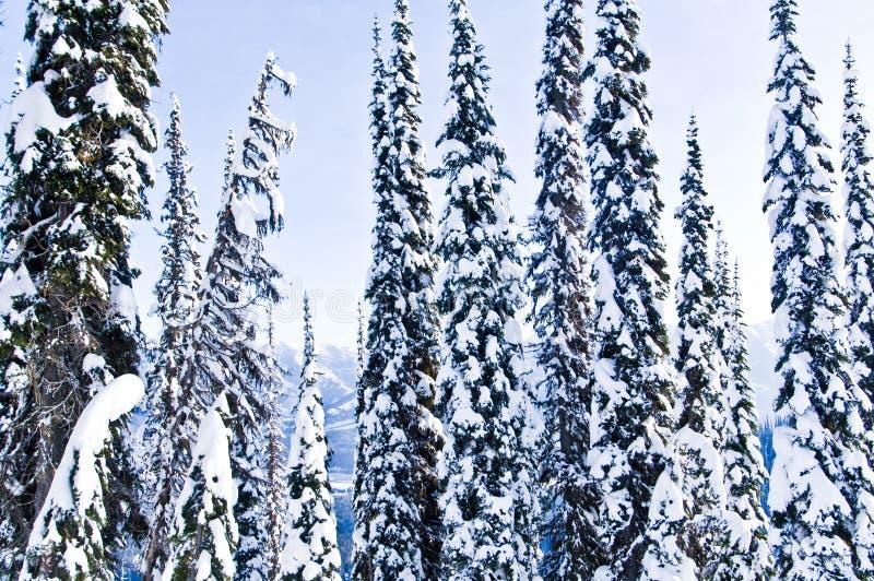 Winter trees snow stock image