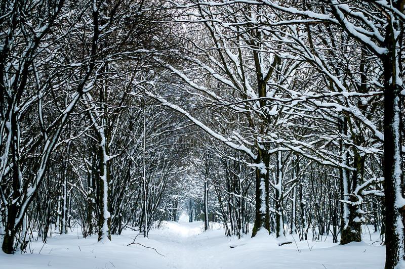 Download Winter Trees In Snow Royalty Free Stock Image - Image: 34151916