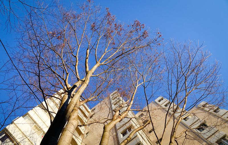 Winter trees under blue sky. Winter trees with buildings under blue sky at sunny day in national park stock image
