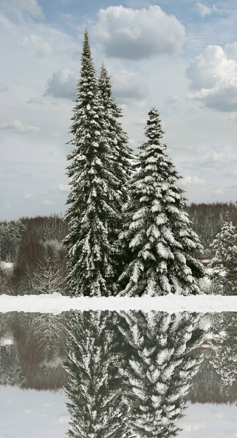 Free Winter Trees With Reflection Royalty Free Stock Images - 3659199