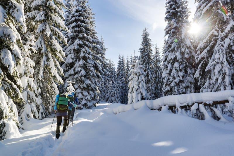 winter trekking in a mountain forest stock photos