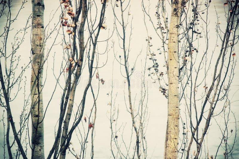 Download Winter twigs stock photo. Image of warm, cross, orange - 29361074