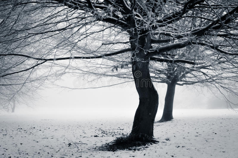 Winter - with a twist. Two leafless trees stands in a snow covered and foggy park - the tree in the front has a coy twist seemingly giving the other a bump stock photo
