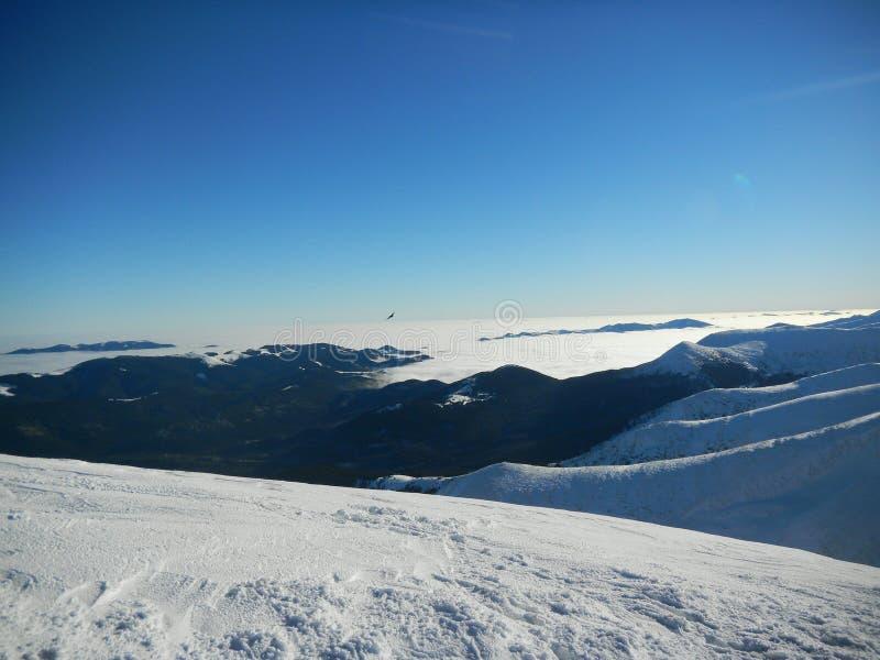 Winter Ukrainian Carpathians royalty free stock photo