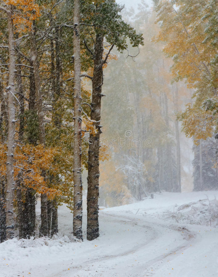 Winter und Autumn Collide in Colorado stockbilder