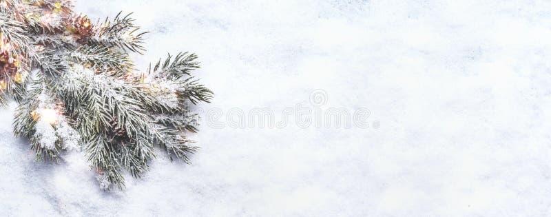 Winter- und Weihnachtsschneeuntergrund Zweigstelle der Tanne mit Tannen ist schneebedeckt Oberansicht Leerzeichen kopieren Bokeh  lizenzfreies stockfoto