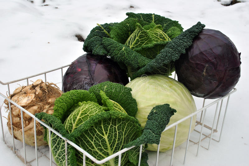 Winter vegetables on snow stock photography