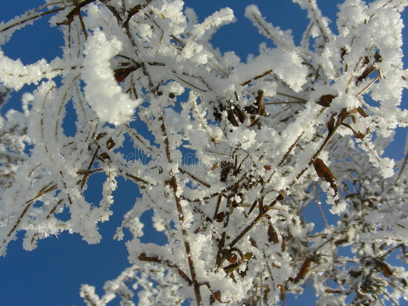 Winter vegetation against the blue sky. bushes and trees covered with hoarfrost and ice stock photo