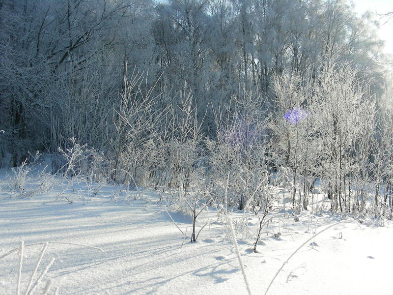 Winter vegetation, bushes and trees covered with hoarfrost and ice stock photography