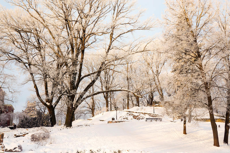 Download Winter view of city park stock photo. Image of park, tress - 83707808