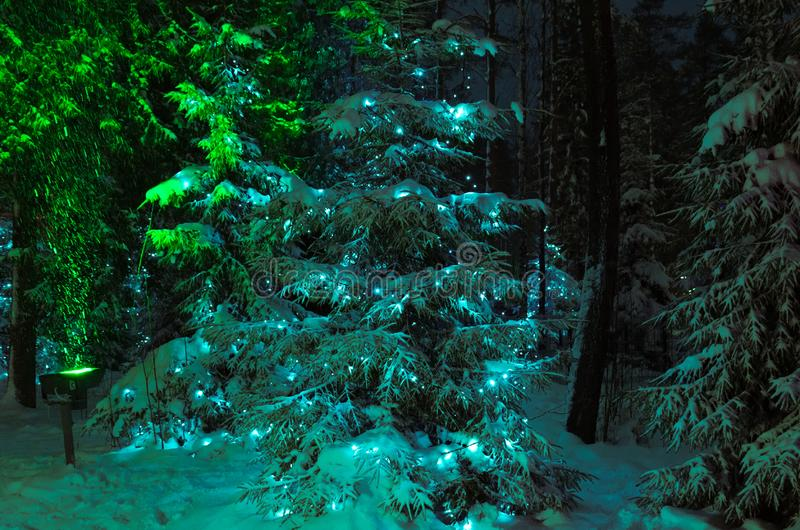 Winter view : spruce in the night forest decorated with Christmas garland stock photography