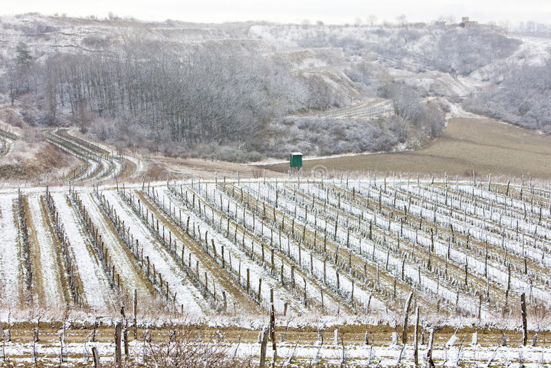 Download Winter vineyards stock image. Image of central, vineyard - 22864469