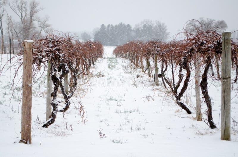 Winter vineyards stock photography