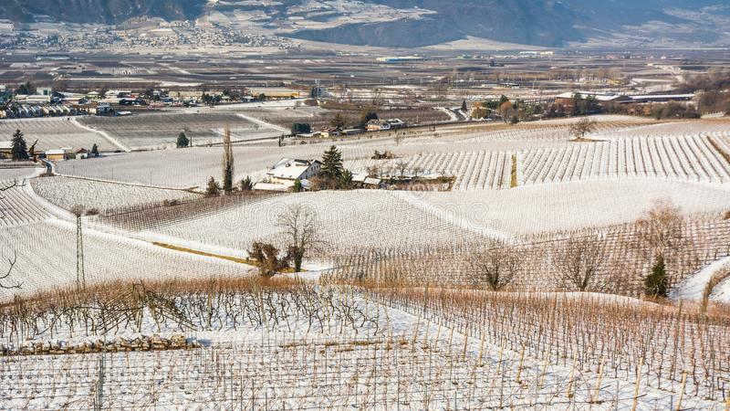 Winter vineyards landscape, covered with snow. Trentino Alto Adige, Italy. Main economic factors are viticulture along the South T. Yrolean Wine Route from royalty free stock photos