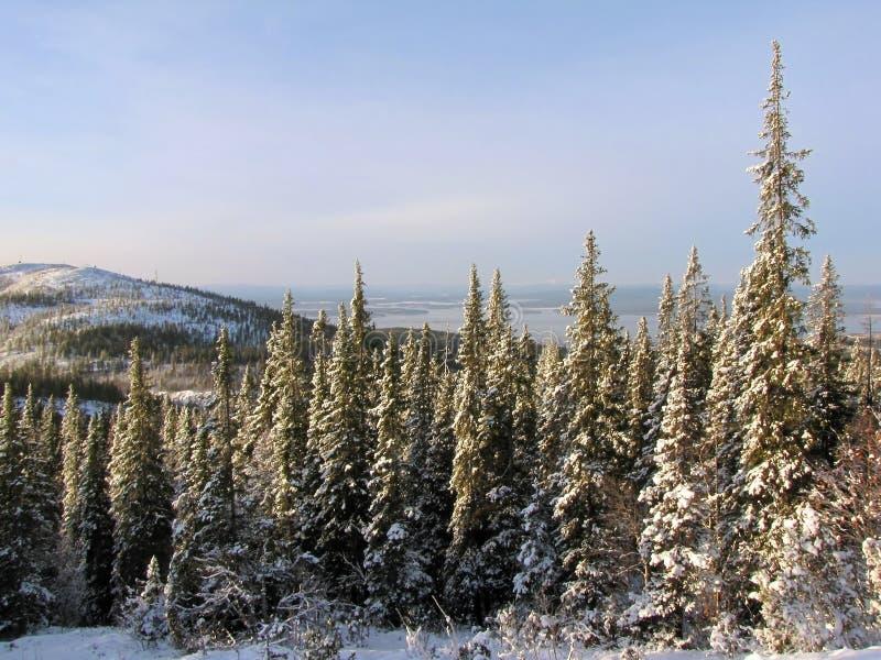 Winter-Wald stockfotografie