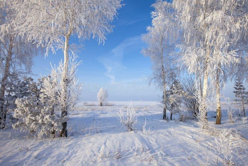 Winter-Wald lizenzfreie stockfotos